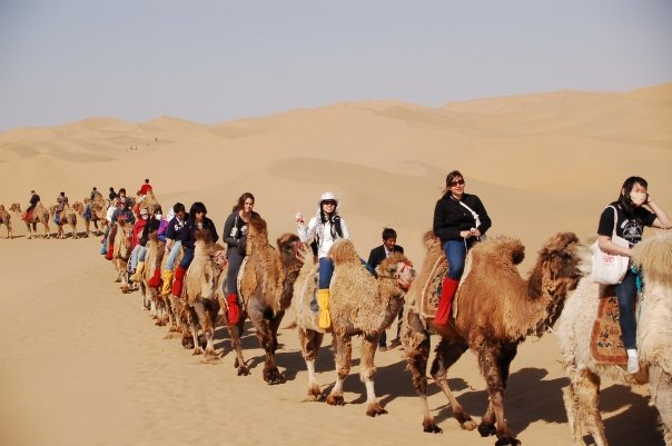 CSU Students on Camels, Inner Mongolia