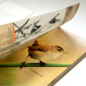 Book with Drawing of a Bird