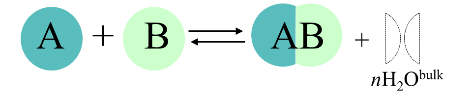 This figure depicts a binding equilibrium between two molecules, including their hydration shells.