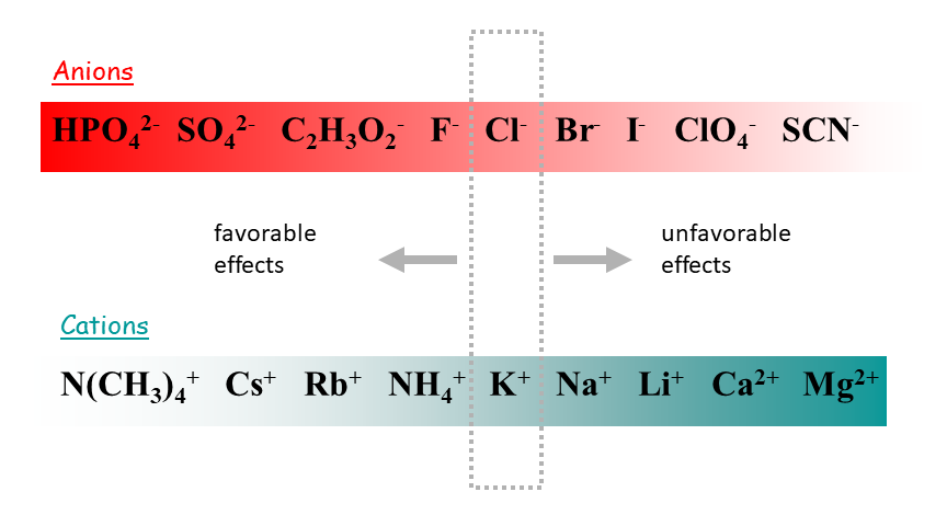 This is a schematic representation of the Hofmeister series for anions and cations, ranked from the most favorable to the most unfavorable.