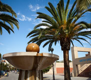 A photo of the SJSU fountain and a huge palm tree.