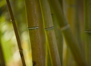 An abstract photo of bamboo.