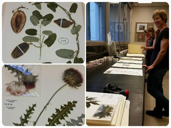 collage of herbarium sheets and volunteers