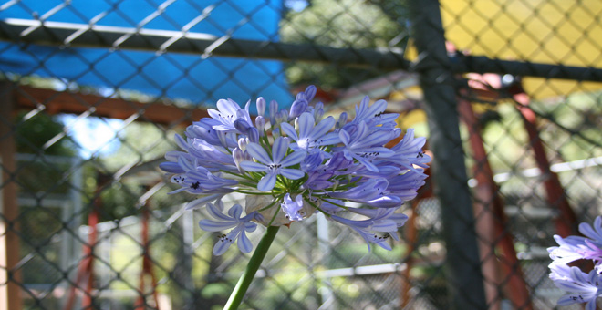 photo of flower at play yard in summer