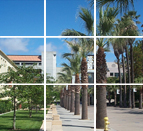 Palm Trees lined El Paseo de Ceasar Chavez with Window Effect